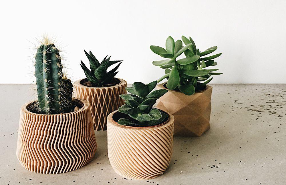 Cache pot pour cactus